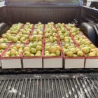 Apples in truck bed